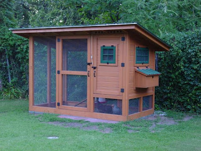 Getting Clucky Raising Urban Chickens Porch Advice