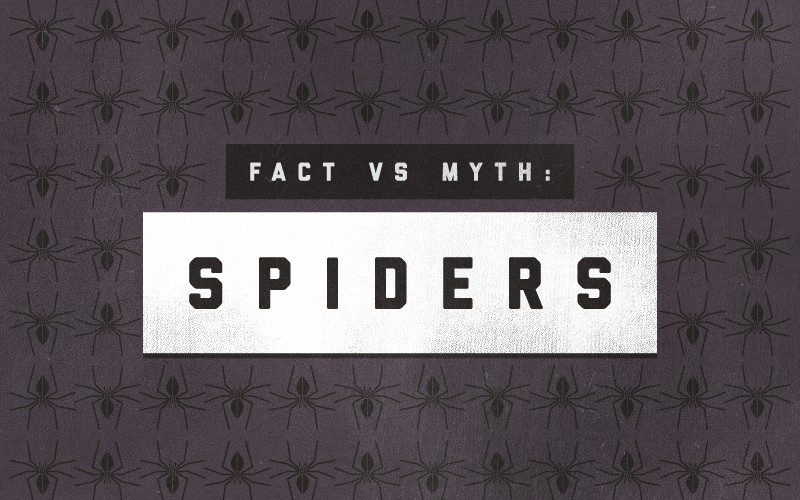 Spiders-Infographic-Porch-top-800x500