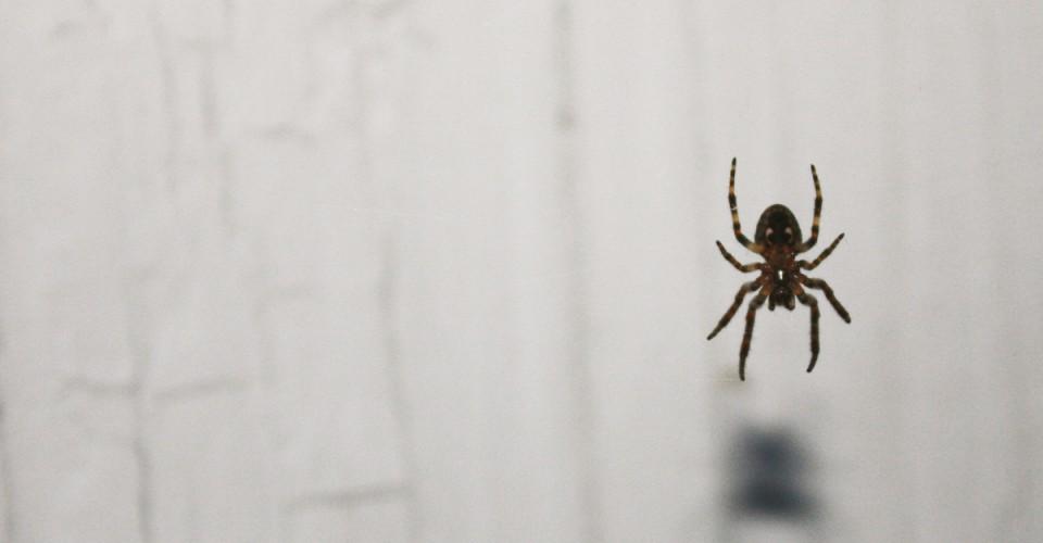 spider-960x500