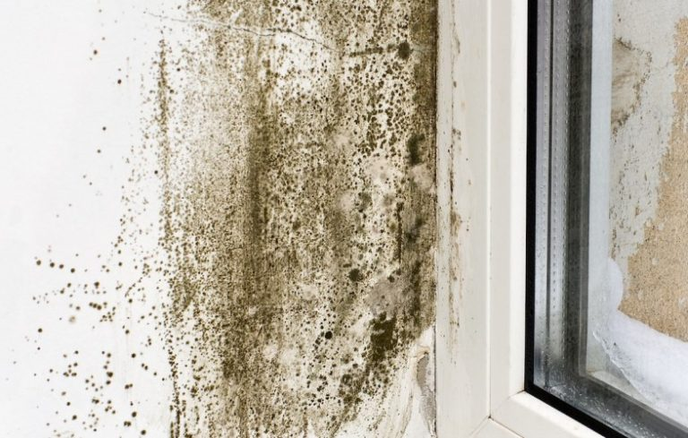 Surface Mold In Bathroom what you need to know about mold and mildew - porch advice