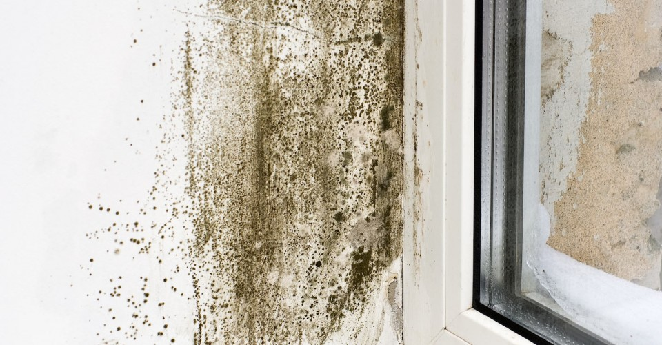 what you need to know about mold and mildew