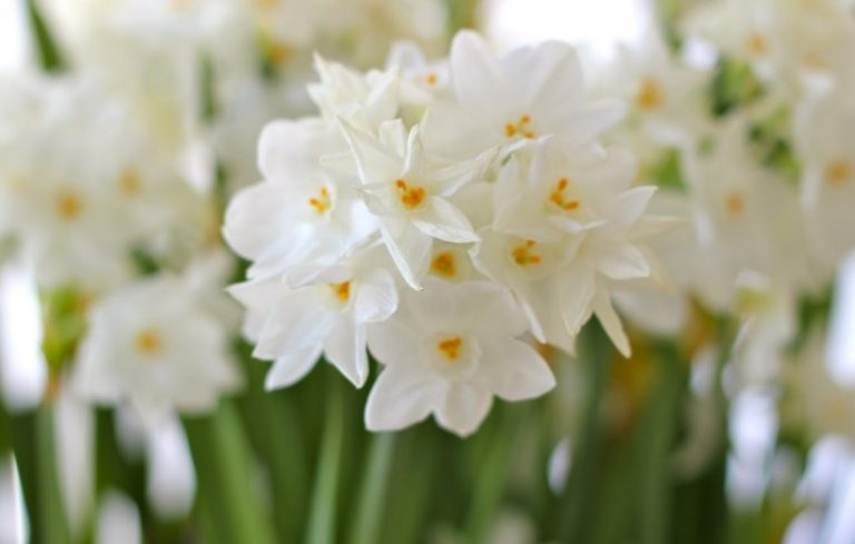 Get beautiful winter blooms by forcing bulbs porch advice in the midst of winter with its short dark days and bitterly cold nights it can seem as if spring will never arrive it can get a bit depressing when it mightylinksfo