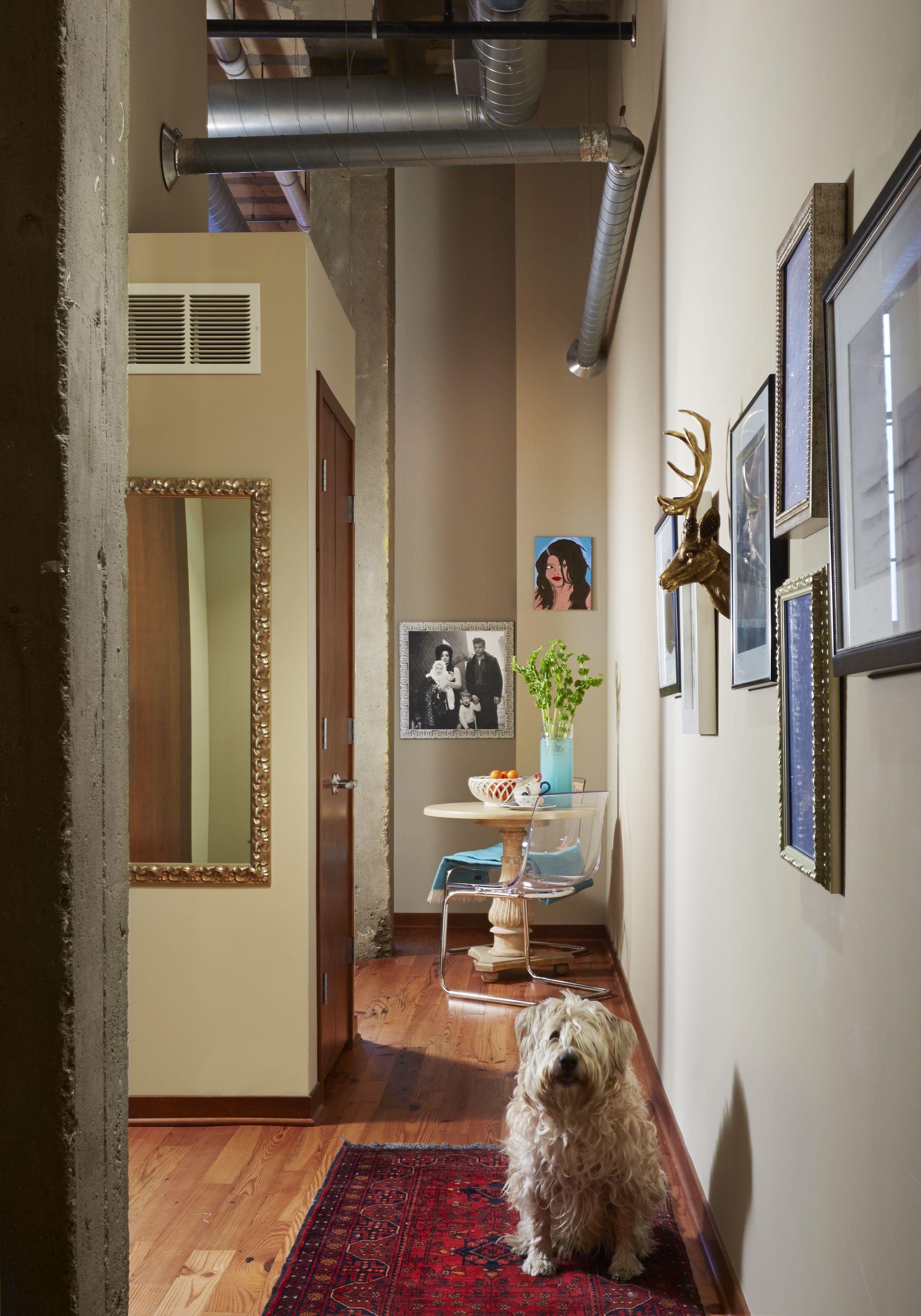 Martha O'Hara Interiors - dog spots