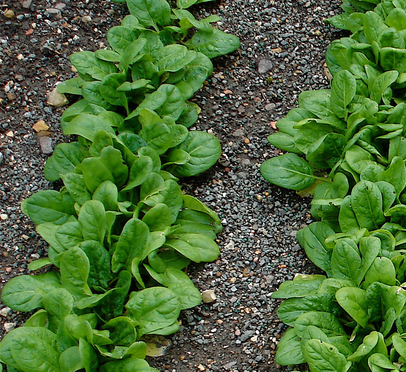 10 Top Vegetables To Grow In Containers Spring To Fall: 7 Easy-To-Grow Vegetables You Can Plant This Weekend
