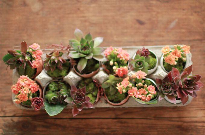 Karine Brighten - mini succulent garden