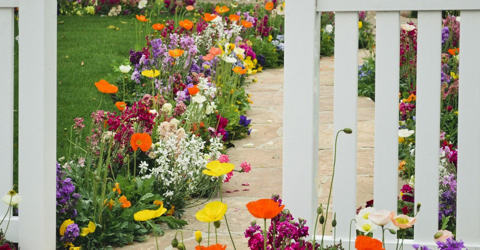 Spring Color Fix 6 Vivid Flowers That Are Perfect For Containers