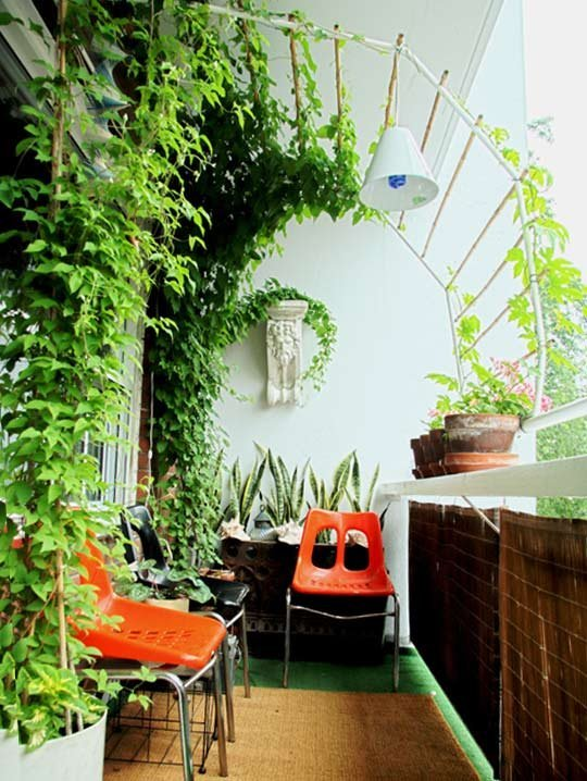 Apartment Therapy - vine canopy