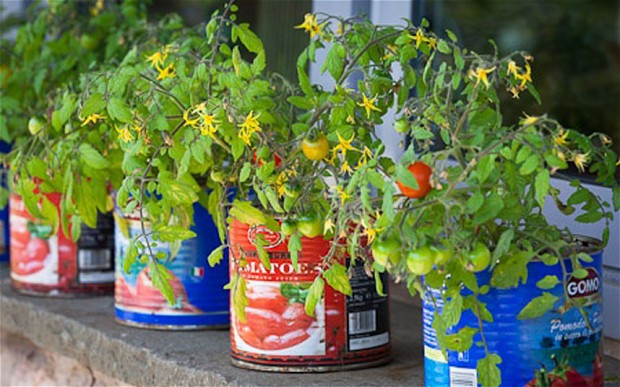Big Blog of Gardening - tomato containers