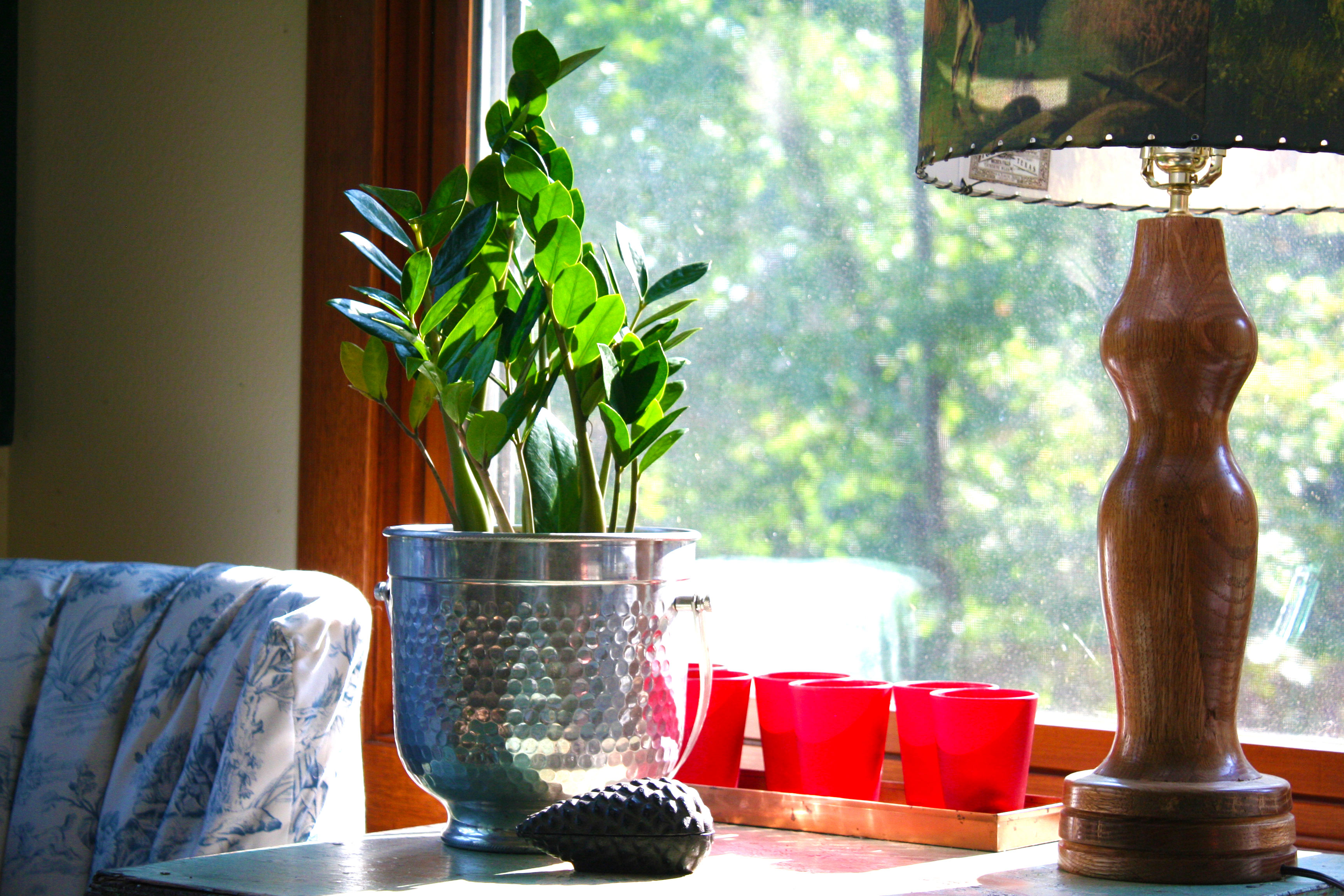 5 Indoor Plants That Are Almost Impossible To Kill