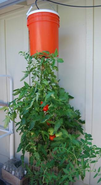 Gardening Know-How - tomato hacks