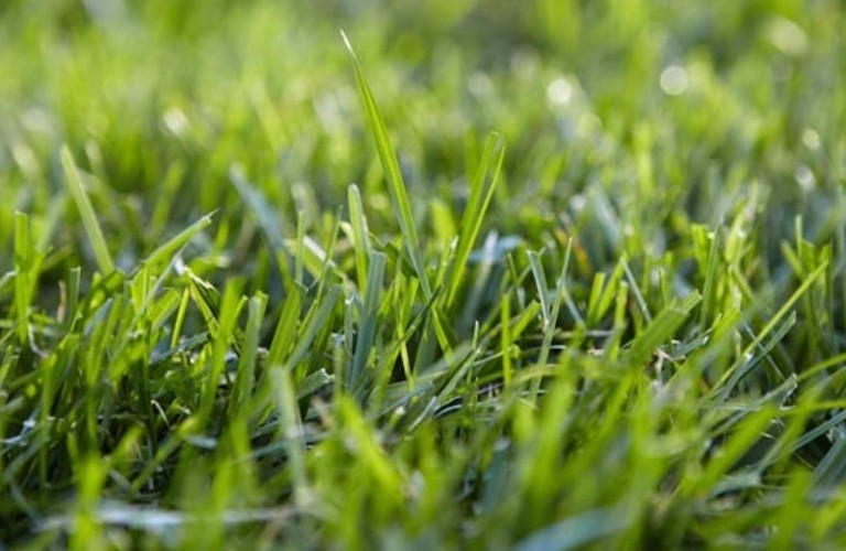 Lowes-grass-lawn-960x500