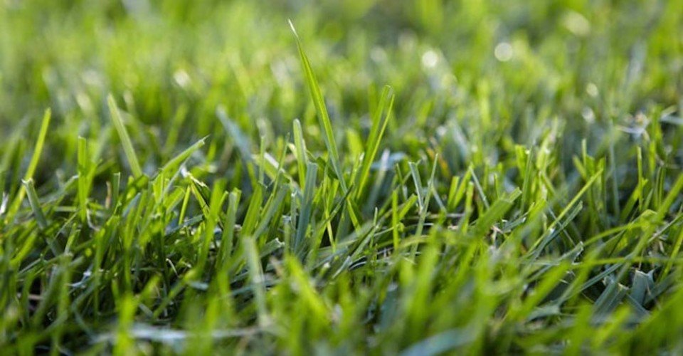 Green Grass Lawn Care Nebraska : Now by summertime you ll be enjoying green grass without a care