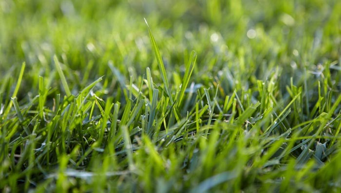 Get Your Lawn Moss Free And Keep It That Way In 4 Easy