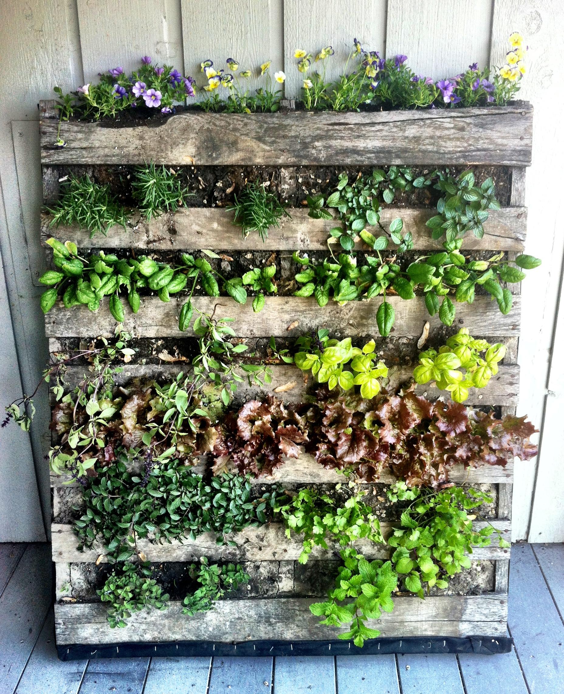 Vertical Kitchen Herb Garden 8 Trash Into Treasure Garden Diys Youve Got To Try Porch Advice