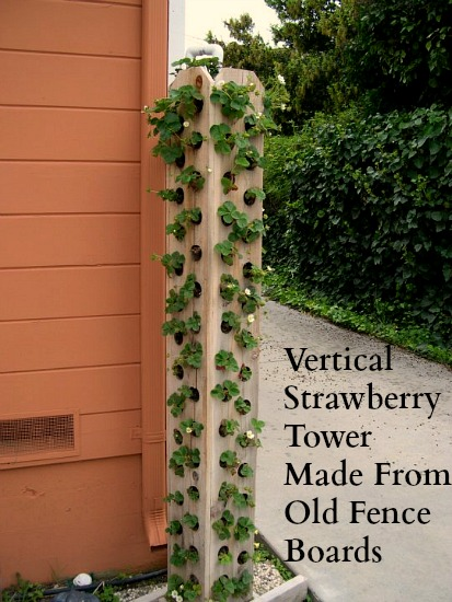 One Hundred Dollars a Month - strawberry tower