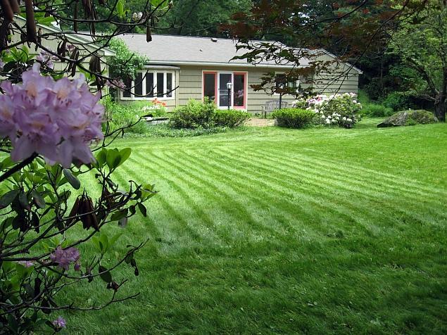 Pearl's Premium - lawn