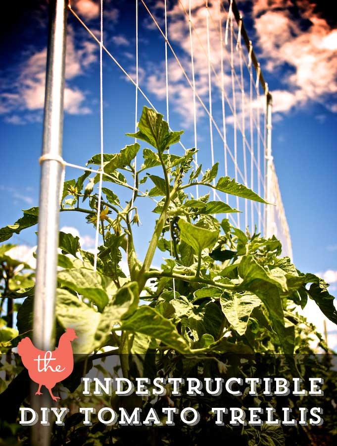 Tomato Trellis Ideas Part - 50: Make An Indestructible Trellis