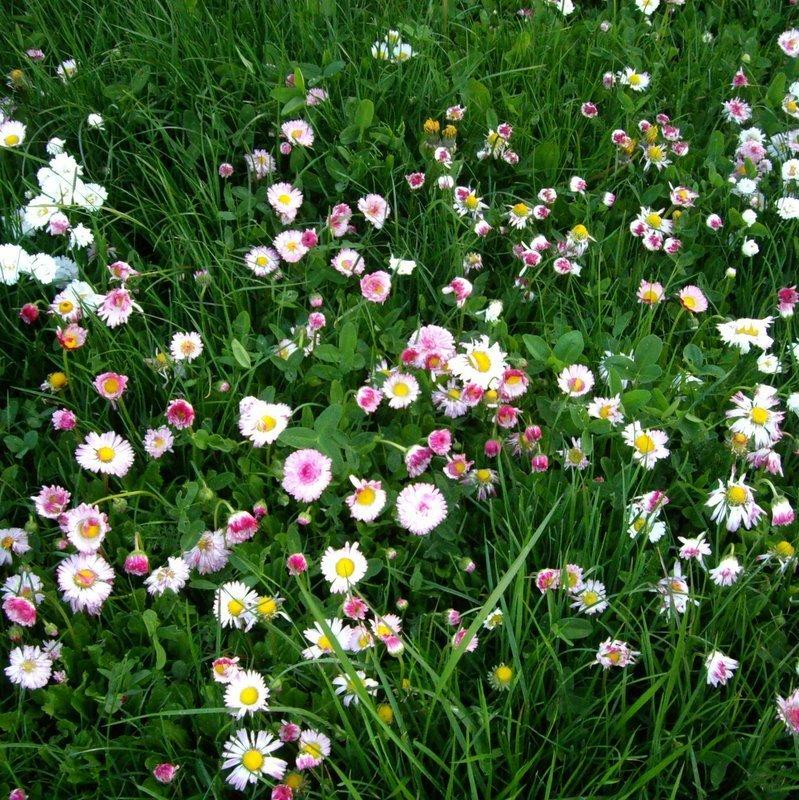 ProTime Lawn Seed - Fleur de Lawn