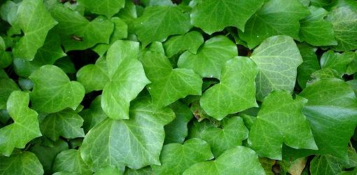 Today's Homeowner - Porch - English Ivy