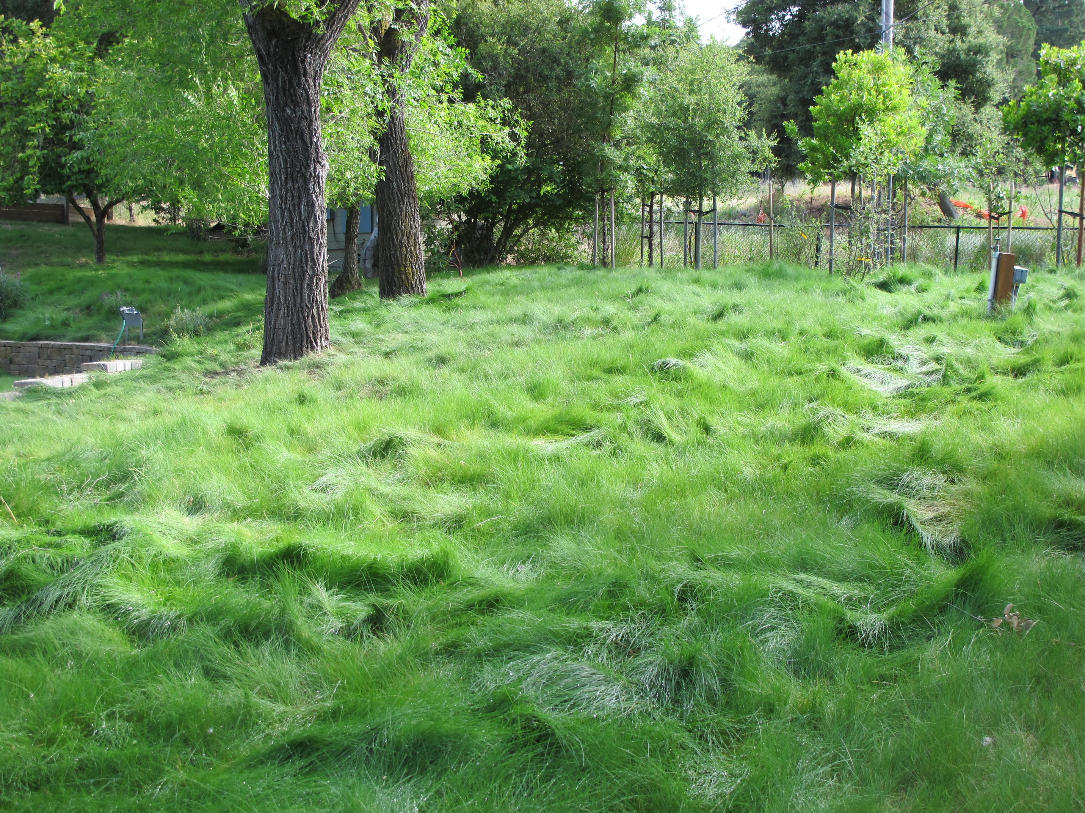 Waidy - Eco Lawn