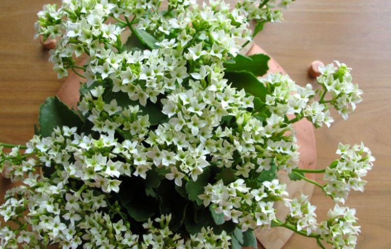 5 Indoor Plants That Are (Almost) Impossible To Kill