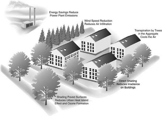 Trees can provide energy savings for homes.