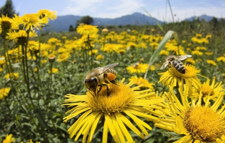 Lovely Bay Nature   Bees