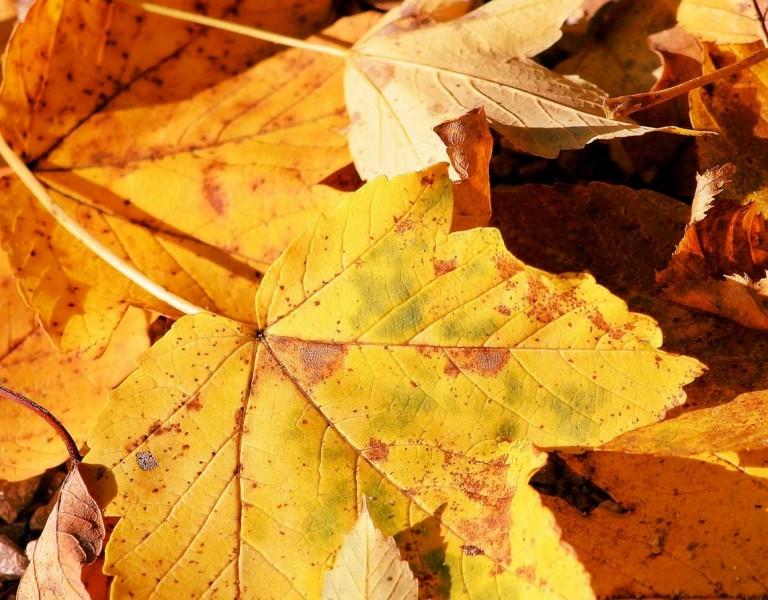 Leaf-Removal-001 (1)