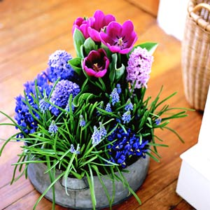 Try mixing several different bulb types in one container for a dramatic impact. You may need to chill certain bulbs, like tulips. Image credit: Better Homes & Gardens