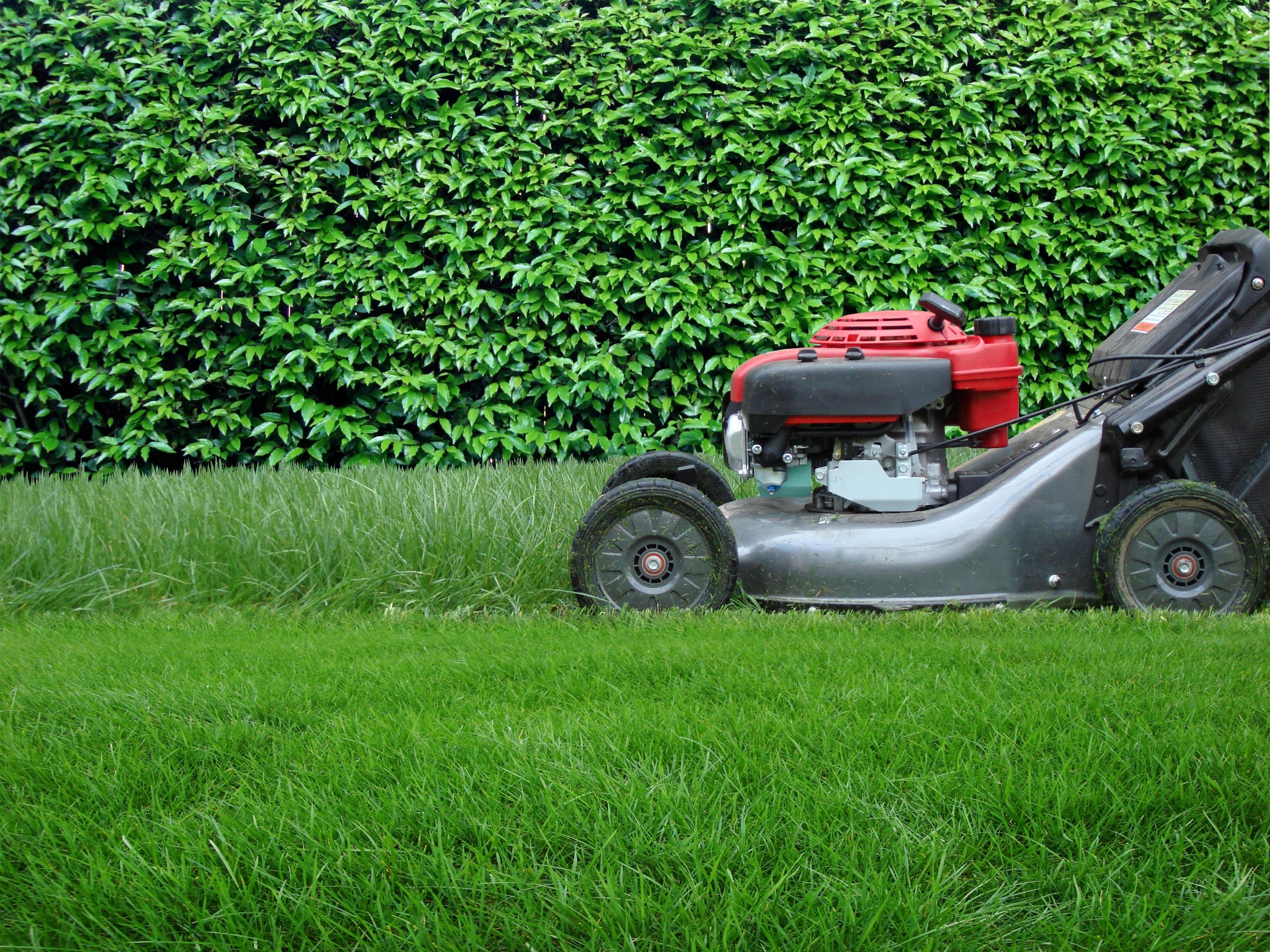 evergreen tree u0026 landscape service lawn u0026 garden service brier
