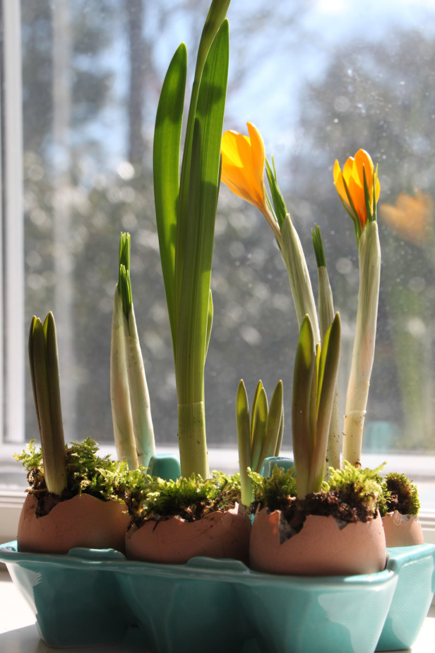 Small bulbs can even fit inside an empty eggshell! Image credit: HGTV