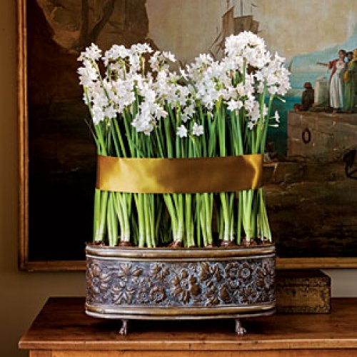 When paperwhites grow tall, keep them straight with a pretty, wide ribbon. Image credit: Southern Living