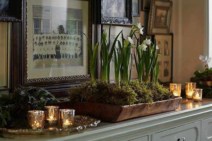 This low, wooden tray works great for forced bulbs. A bit of moss helps soften the edges. Image credit: Gardenista