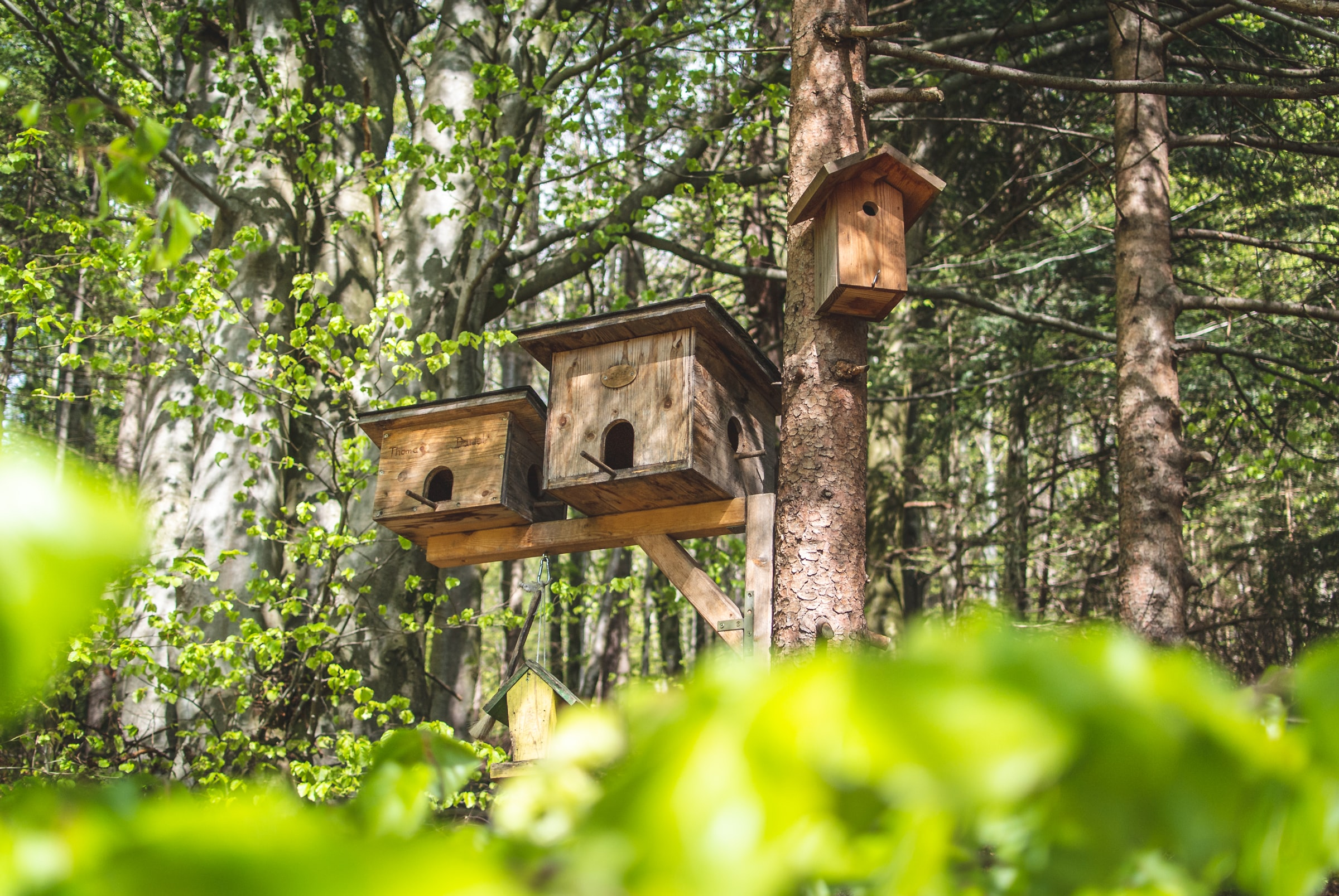 Three birdhouses on one tree in a wooded area